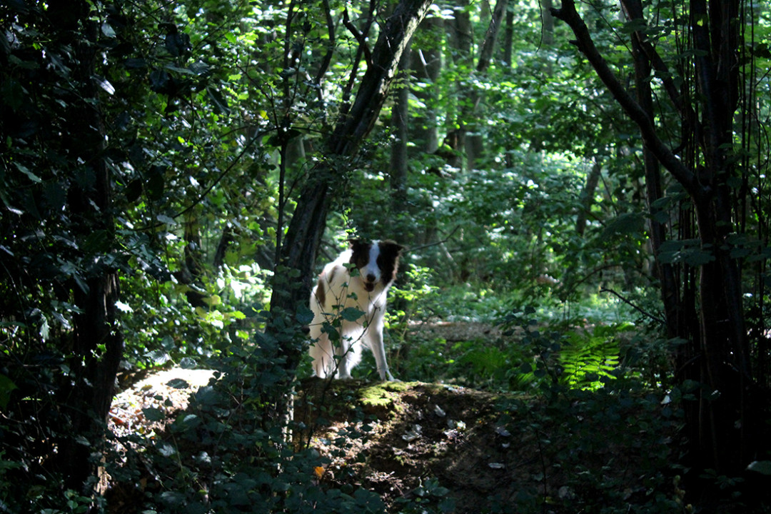 Molly in the woods